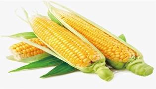 早春玉米种植时间