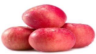陕西洛川苹果成熟的时间