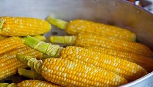 玉米的禁忌与副作用