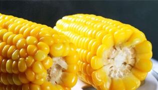 玉米没熟透能吃吗