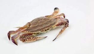 铜蟹和梭子蟹的区别