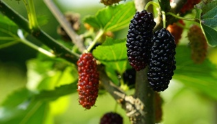 富含硒的水果有哪些