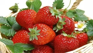 草莓芽线虫打什么药