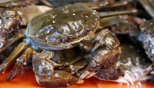 螃蟹冒泡意味着什么