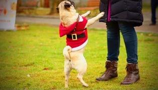 如何训练狗狗站立