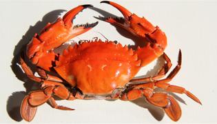 大闸蟹的壳是干垃圾还是湿垃圾
