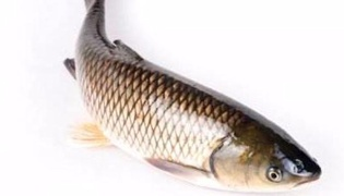生鱼怎么保存