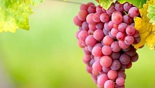 葡萄如何保存