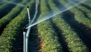 使用软管灌溉的方法