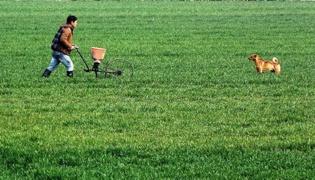怎样制作有机肥料:含氮植物肥料