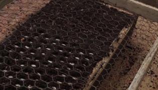 播种育苗技术:大粒种子