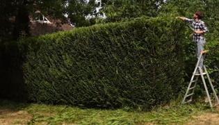 怎么修剪树枝