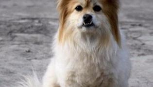什么是串串狗