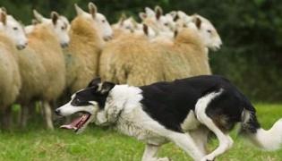狗的品种有哪些