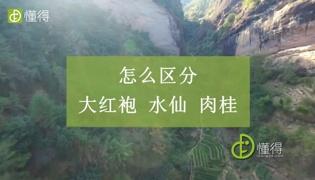 武夷山岩茶品种有哪些