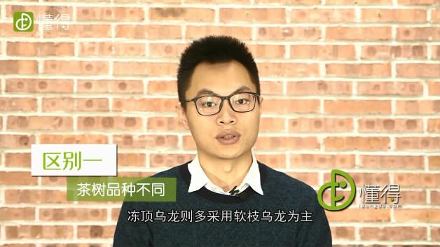 台湾冻顶乌龙和福建乌龙茶(铁观音)的差别-茶树品种不一样