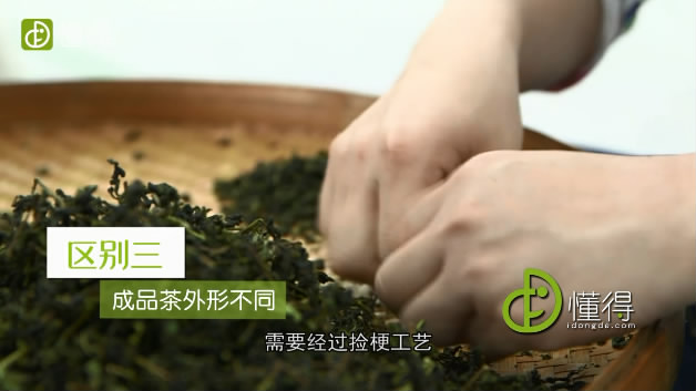 台湾冻顶乌龙和福建乌龙茶(铁观音)的差别-成品茶的外形不同