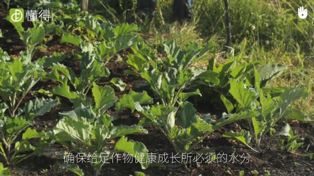 栽培技术:农业灌溉软管-浇水的量需注意