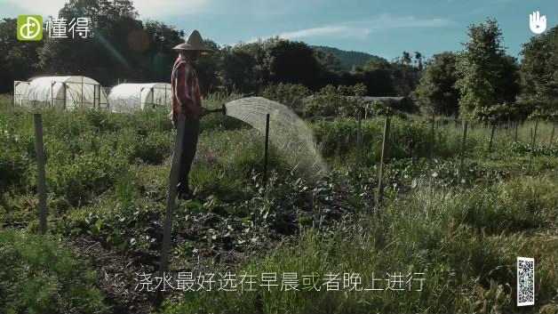 栽培技术:农业灌溉软管-浇水可选在早晨和晚上