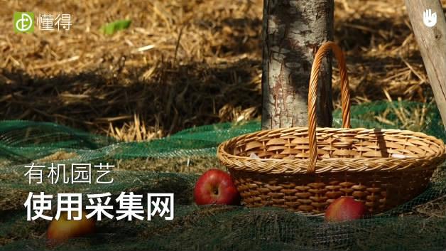 田园收获季:采集苹果-采集网可以帮助收集果实