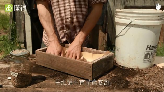 播种育苗技术:小粒种子Ⅰ-把纸铺在育苗盘底部