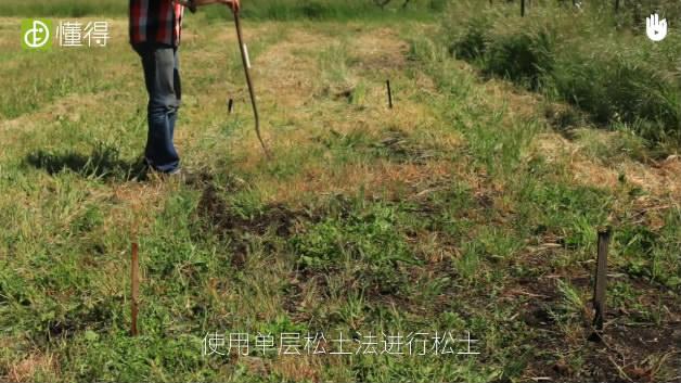 开垦土壤:生物密集型苗圃-用单层松土法松土