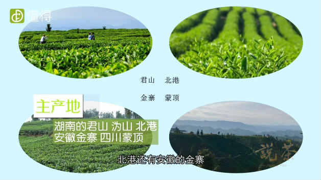 什么是黄茶-黄茶产地有湖南君山等地