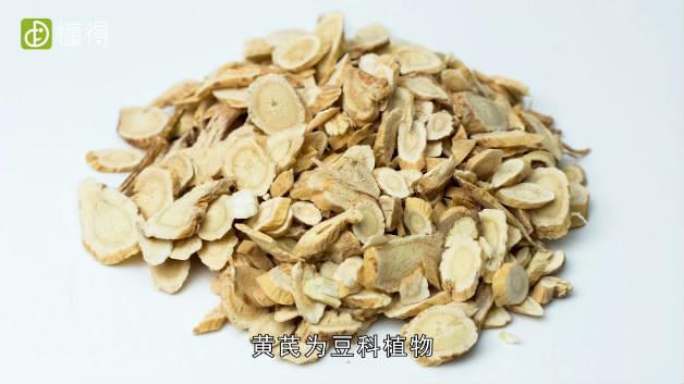 黄芪的功效与作用-属于豆科食物